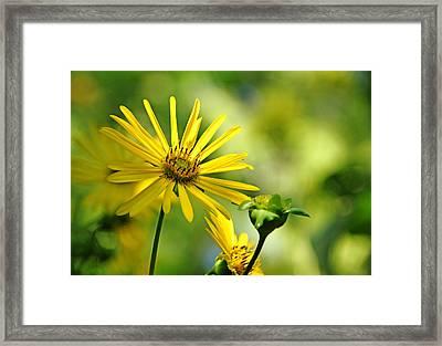 Ray Of Sunshine Framed Print by Debbie Oppermann