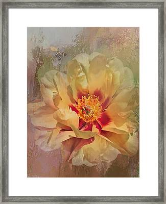 Rayanne's Peony Framed Print
