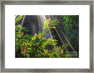 Rays Of Sunlight Framed Print