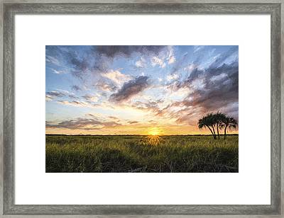 Rays On Myakka II Framed Print
