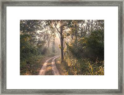 Rays Through Jungle Framed Print by Hitendra SINKAR