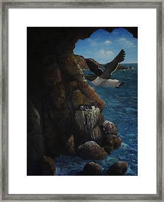 Razorbills Framed Print by Eric Petrie