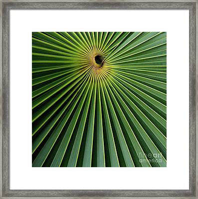 Razzled Rays Mexican Art By Kaylyn Franks Framed Print
