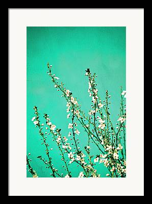 Cherry Photographs Framed Prints