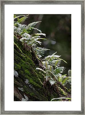 Reach For The Light Framed Print
