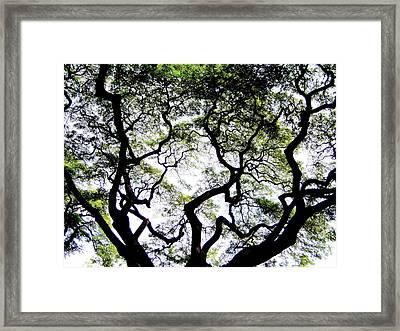 Reach For The Sky Framed Print by Karen Wiles