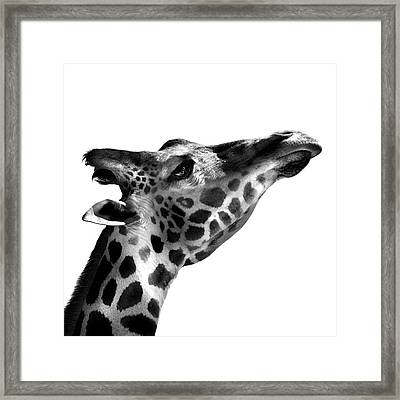 Reach For The Stars Framed Print