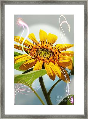 Reach For The Sun Framed Print by Lori Mellen-Pagliaro