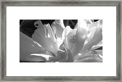 Reach Framed Print by James Temple