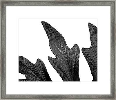 Reach Framed Print by Slade Roberts