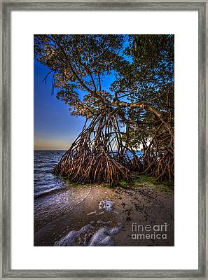 Reaching For Earth And Sky Framed Print