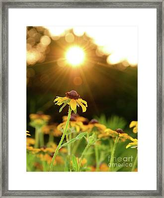 Reaching For Evening Sun Framed Print