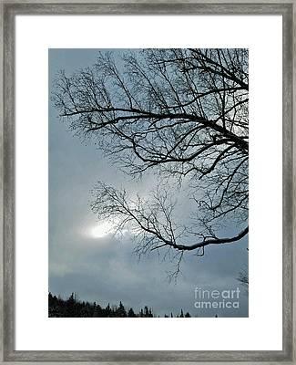 Reaching For The Light Framed Print by Lloyd Alexander