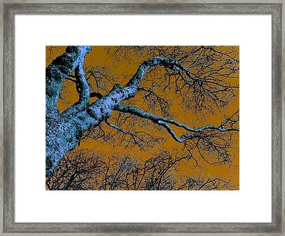 Reaching For The Skies Framed Print