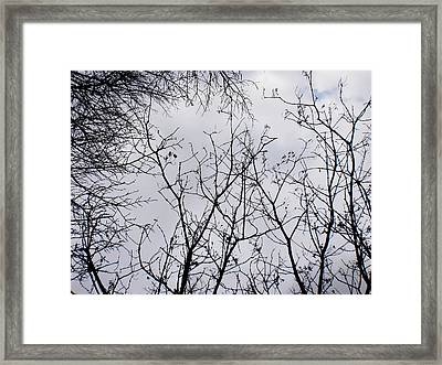 Reaching For The Skies Framed Print by Trilby Cole