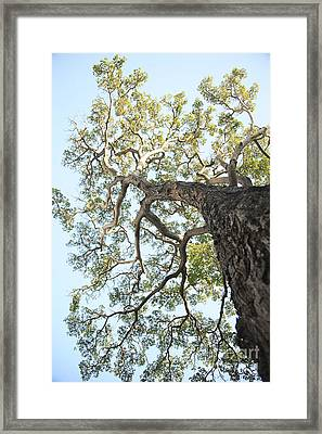 Reaching For The Sky Framed Print by Brandon Tabiolo - Printscapes