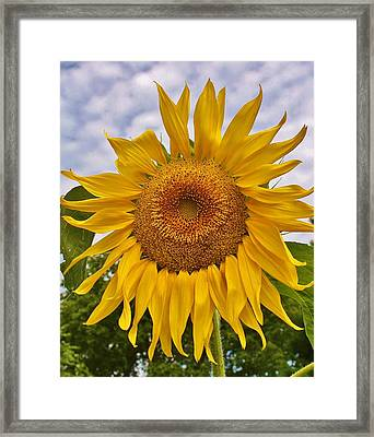 Reaching For The Sky Framed Print by Bruce Bley