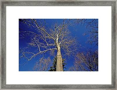 Framed Print featuring the photograph Reaching For The Sky by Suzanne Stout