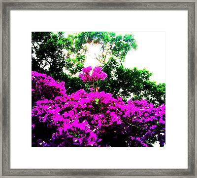 Reaching For The Sun Framed Print by Douglas Kriezel