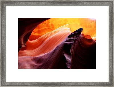 Reaching For The Sun Framed Print by Jim McCain