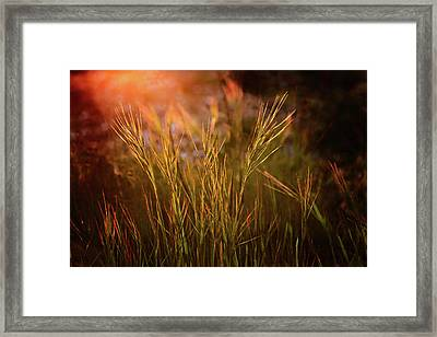 Framed Print featuring the photograph Reaching For The Sunset Dark by Mary Jo Allen