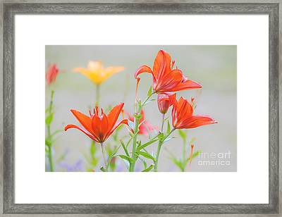 Reaching Higher Framed Print