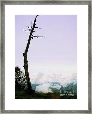 Reaching In The Shenandoah Framed Print