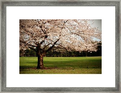 Reaching Out - Ocean County Park Framed Print by Angie Tirado