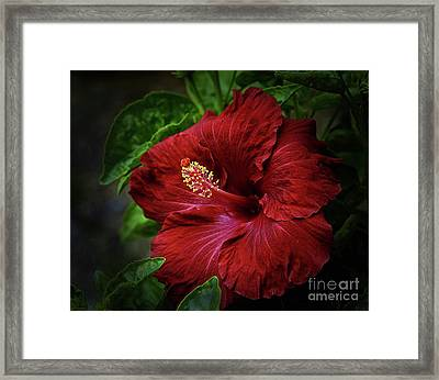 Reaching Out Framed Print by Arnie Goldstein