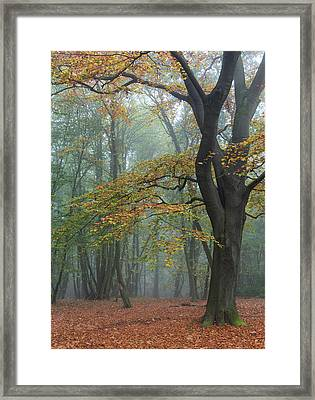 Reaching Out Framed Print by Chris Dale