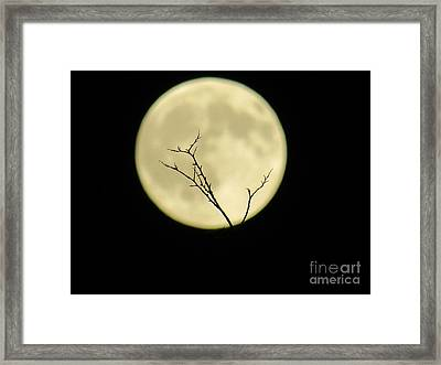 Reaching Out Into The Night Framed Print
