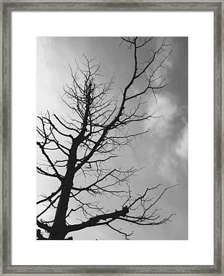 Reaching Out Framed Print by Linda Woods