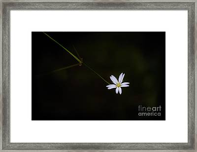 Reaching Out Framed Print