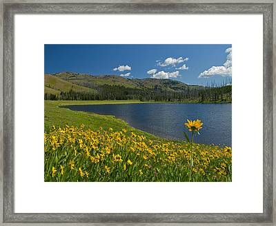 Reaching Out Framed Print by Sandy Sisti