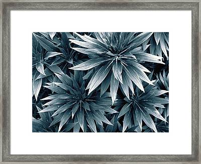 Framed Print featuring the photograph Reaching Out by Wayne Sherriff
