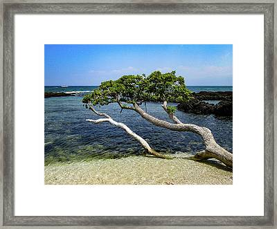 Framed Print featuring the photograph Reaching by Pamela Walton