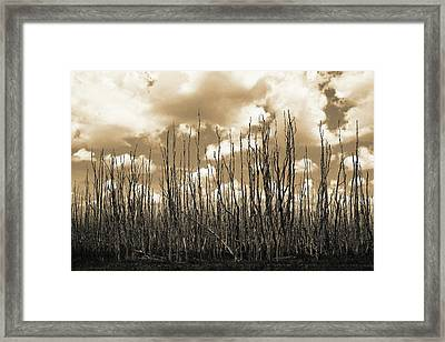 Reaching To The Sky Framed Print