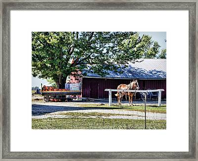 Ready And Waiting Framed Print by Cricket Hackmann