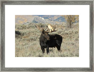 Ready And Waiting Framed Print by Sandra Bronstein