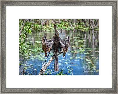 Ready For A Swim Framed Print