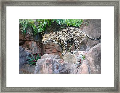 Ready For Attack Framed Print by Judy Kay
