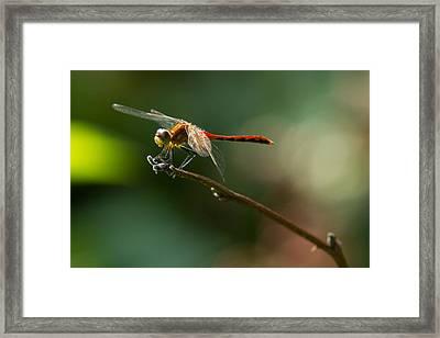 Ready For Flight Framed Print by Frank Pietlock