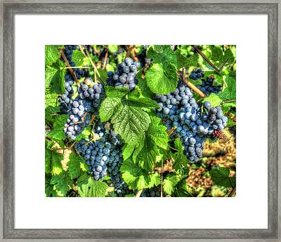 Framed Print featuring the photograph Ready For Harvest by Alan Toepfer