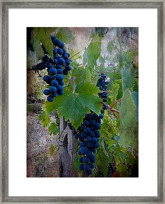 Ready For Harvest Framed Print by Dorothy Berry-Lound