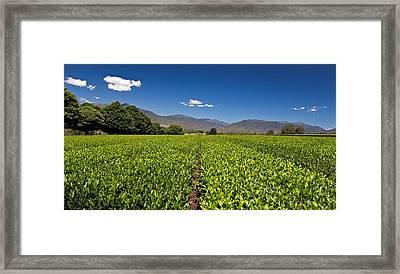 Ready For Harvest Framed Print by Mark Lucey