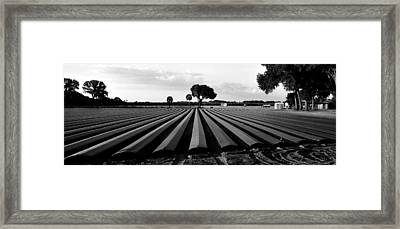 Ready For Planting  Framed Print by David Lee Thompson