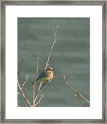 Ready For Spring Framed Print by Magda Levin-Gutierrez