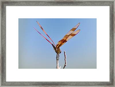 Ready For Take Off Framed Print by Bill Cannon