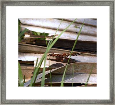 Ready For Take-off Framed Print by Terri Mills