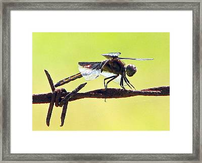 Ready For Takeoff Framed Print by Lonnie Tapia